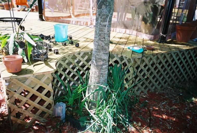 51-deck-around-tree