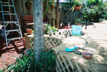 67-wrap-deck-around-tree